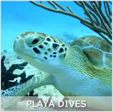 Green Turtle diving in Playa reefs